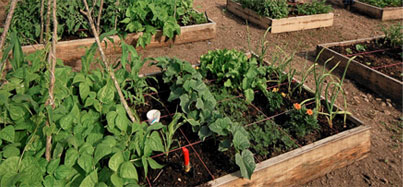 Picture of an herb garden